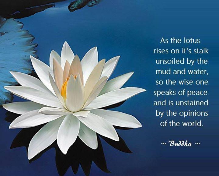 e3df50773c8b1457f5229dca2ed3d9ab--lotus-quote-zen-meditation.jpg