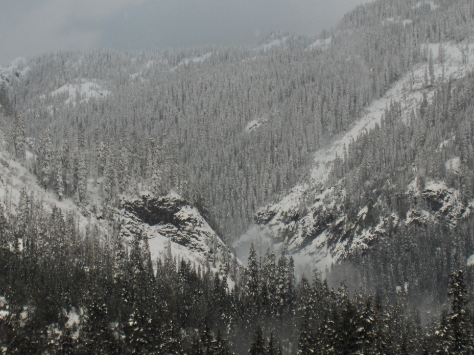 snow-capped-trees-and-mountains.jpg